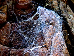 Thinly veiled (Nanny Bean) Tags: webwednesday cobweb filaments spidersilk