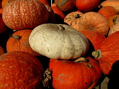 Not all orange (Patchwork Daily Desire) Tags: flower forest farm family patchworkdailydesire day fall orange pumpkin leaf green