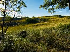 Sand dunes, Ludington State Park (Dennis Sparks) Tags: color michigan ludington ludingtonstatepark beachgrass sanddunes iphone