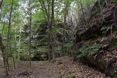 Ferne Clyffes (Urban Farmgal) Tags: cliffs limestone ferns green park