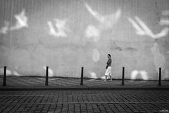 Light birds (Julien Rode) Tags: city contraste insolite lumière nb personnage portfolio prague rue street streetphotography urbain urban ville
