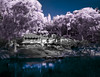 Studley Park, Infrared (Scottmh) Tags: 2017 boathouse d7100 infrared nikon park studley winter