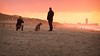 The couple & their dog D (Drummerdelight) Tags: into sun sunlight intothesun sunlightset