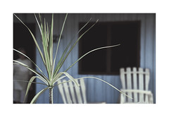 The lady.   ( Viñales ) (José Luis Cosme Giral) Tags: thelady travel nikon scanned plant house blur color street viñales cuba