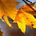 Golden October - 2017-10-29