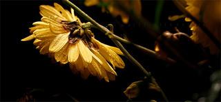 Autumn Elegy PA080568