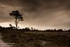 Kalmthoutse Heide [6] (Werner Wattenbergh) Tags: kalmthout antwerpen belgie bel
