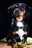 UPDOG (Dark_chancho) Tags: dog sexydog pet hardlight doggie portraitofapet sensibleside