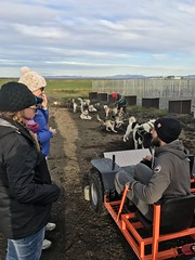 Dog Sledding Iceland