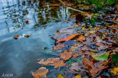 autumn. (louisa.vàlinth) Tags: autumn seasons fall herbst bunt nature beauty