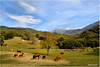 La campagne Corse (arno18☮) Tags: vaches landscape compagne vert corse france cièl nuages clouds nature saariys quality pictures gallery paysage nwn