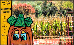Smile on Saturday Orange (Dotsy McCurly) Tags: orange color pumpkin nj newjersey farm ruffy corn stalks autumn colors trees fence photoshop smileonsaturday vividorange nikond750 tamron18400mmf3563