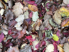 2017-10-08 (Day 281) Autumn Leaves