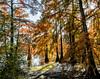 PHIL7107-Modifier_DxO (Phil2No) Tags: arbre greatshot arbres feuille automne couleur forêt nature