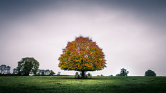The tree - Kildare, Ireland - Landscape photography (Giuseppe Milo (www.pixael.com)) Tags: photo countryside yellow landscape tree ireland nature photography colors sky green kildare europe orange travel onsale