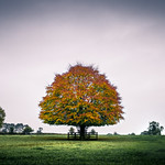 The tree - Kildare, Ireland - Landscape photography thumbnail