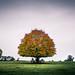 The+tree+-+Kildare%2C+Ireland+-+Landscape+photography