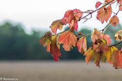 Tons d'automne (Remnaeco35) Tags: bokeh pentaxk5 feuilles automne