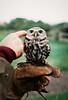 Little guy (Bazzerio) Tags: owl 35mm analogue adventure film vintage fujifilm travel bazzerio bird photographersontumblr grain grainy documentary