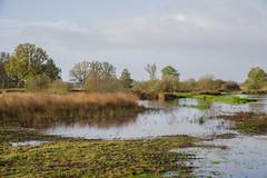 _IMG0442 (Henk de Regt) Tags: netherlands holland veluwe natuur nature landschap landscape moeras swamp mist fogbomen trees bos forest heide heath