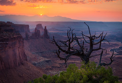Canyonlands (andreassofus) Tags: mesaarch canyonlands canyonlandsnationalpark utah america canyon rocks rockformations sunrise sun sunlight light sky mountains mountainscape nature amazing beautiful tree deadtree treesceleton view viewpoint overlook travel travelphotography hite hiking arch summer summertime canon manfrotto