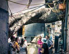 Legendary Tree (undeklinable) Tags: india indian delhi new old travel trip culture hindi tourism architecture history tree legend