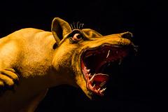 Tasmanian Tiger (Wanda Amos@Old Bar) Tags: tasmania tasmaniatiger wandaamos scary 7dwf crazytues mouth teeth tongue anger monster animal art festival mofo spooktacular smileonsaturday