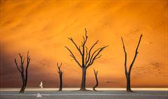 Deadvlei, Sossusvlei (www.fourcorners.photography) Tags: africa dunes namibia sand sossusvlei namibrandnaukluftnationalpark camelthorntrees drypan deadvlei sunrise