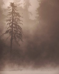 Peacefulness (jeanmarie's photography) Tags: peaceful serene washingtonstate cottagelake lake weather foggy mood moody mist fog jeanmarie jeanmarieshelton