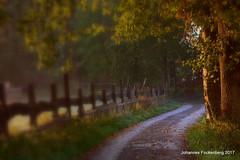 Landleben (grafenhans) Tags: sony rx100 rx 100 carl zeiss cz carlzeiss weg zaun morgenlicht morgen sonnenaufgang sonnenstrahlen grafenwald bottrop nrw