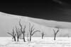 Deadvlei, Namib-Naukluft Park, Namibia (Ulrich Münstermann) Tags: africa afrika bw blackandwhite camelthorn deadvlei farben landschaft namibnaukluftpark namibia tsauchabriver vachelliaerioloba blackwhite colours dead dry giraffethorn kleuren landscape landschap tree valley hardapregion