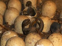 Dinosaur Babies ;)..x (Lisa@Lethen) Tags: dinosaur eggs babies natural history museum london