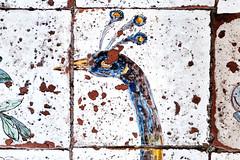 But, I say (S. Hemiolia) Tags: ischia piastrelle pavimento maiolica santamariavisitapoveri zeiss pavone ceramica manualfocus 6d forio contax yashica