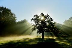 398B7504-AE80-43CB-9DFD-2841FE9E332B (Schlueter101) Tags: wildpark dülmen sonnenaufgang licht morgenstimmung stimmung lichtraum sunrise lightroom tree sonnenstrahlen wood forest germany a7 sony
