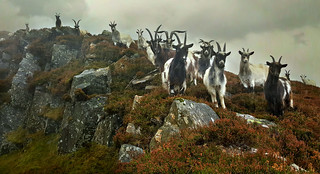 Where the goats have no names