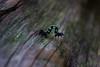 un gusanito (nilsa_gali) Tags: gusano foto fotografia fotografa naturaza wild photo nature t3i canon insectos