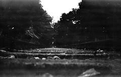 Hear it coming (Rosenthal Photography) Tags: ff120 6x9 landschaft bnw eisenbahnschienen schwarzweiss zeven asa50 gevabox mittelformat mehde städte schienenbus bw 20170904 ilfordpanfplus analog mückenburg dörfer siedlungen gevaert mediumformat blackandwhite 1951 ilford pan panf epson v800 landscape train rail railway track trees