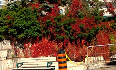 """""""A little thought and a little kindness and are often worth more than a great deal of money.""""  - John Ruskin (Trinimusic2008 - stay blessed) Tags: trinimusic2008 judymeikle nature toronto to ontario canada autumn fall fence hff colours october colors 2017 vines trees bench railing"""
