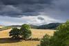 Menace (so_pix) Tags: paysage nature nuages orage ciel arbre paille montagne