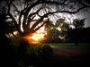 An Oak Tree in the Sunset (soniaadammurray - Off) Tags: digitalphotography trees sunset oak nature garden grass sky reflections shadows