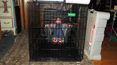 20170527 1652 - yardsale haul - Chucky ended up in the Batman chair in the cage - 165249 (Clio CJL) Tags: 20170527 201705 2017 batmanchair chair batman entertainment comic comics comicbook comicbooks cage chuckydoll doll chucky movie movies childsplay character characterchucky virginia alexandria clintandcarolynshouse upstairs yardsale yardsale20170527