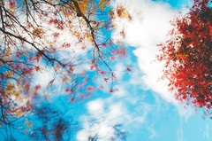 Colorful Wind Movement (jayplorin) Tags: colorful slow shutter wind nature trees plants clouds sky air