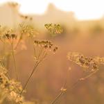 Golden light thumbnail