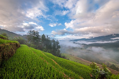 _U1H0829-La Pán Tẩn,Mù Cang Chải,0617 (HUONGBEO PHOTO) Tags: yênbái mùcangchải lapántẩn vietnamlandscape northvietnam beautiful peaceful countryside trees clouds sunrise sky scenery terraces landscape highland outdoor
