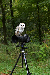 Wildlife prefers the D3S (F VDS) Tags: d3s owl funny 200500 tripod forest captive nikon
