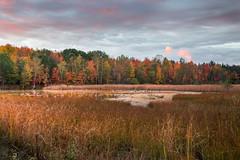 stray light (Christian Collins) Tags: canoneos5dmarkiv ef24105mmf4lisusm sunrise geese pond lone cloud redrays morning midmichigan midland diamonddrive ducks amanecer patos