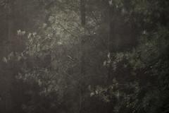 Stitches (jellyfire) Tags: eastanglia eastofengland fauna forest greatbritain landscape landscapephotography mood sonnartfe55mmf18za sony sonya7r suffolk woodland atmospheric branches broadleaf copse countryside deciduous ecology flowers foliage green growth knettishallheath leaf leaves leeacaster life norfolk plants rural serene suffolkwildlifetrust trees trunk unitedkingdom woods wwwleeacastercom zeiss