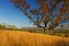 Hudson River Valley (Matt Champlin) Tags: humpday wednesday field farm farming peace peaceful fall november beautiful foliage rural countryside life hudson saratoga ny iloveny nys nature landscape quiet calm canon 2017 saratogabattlefield adk adirondacks