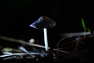at Night (Mushroom) Macro