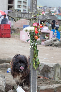 Dog at the Day of the Dead, Lima